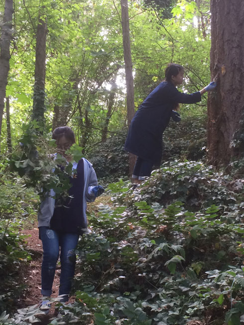 Marine students remove Ivy from trees in local forest