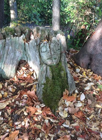 Ivy on tree stump