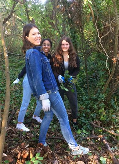 Students remove ivy